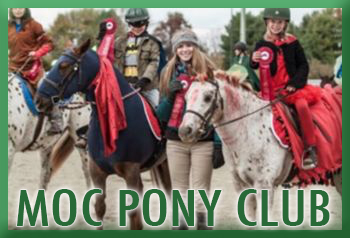 ponyclub button